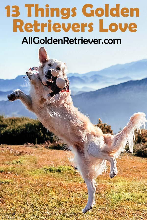 13 Things Golden Retrievers Love