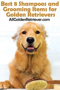 Best 8 Shampoos and Grooming Items for Golden Retrievers