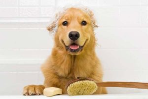 Best 8 Shampoos and Grooming tools for Golden Retrievers